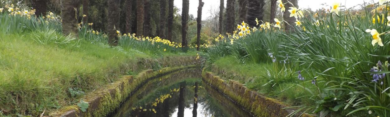 Spring in Dumfries and Galloway - Logan Botanic Gardens